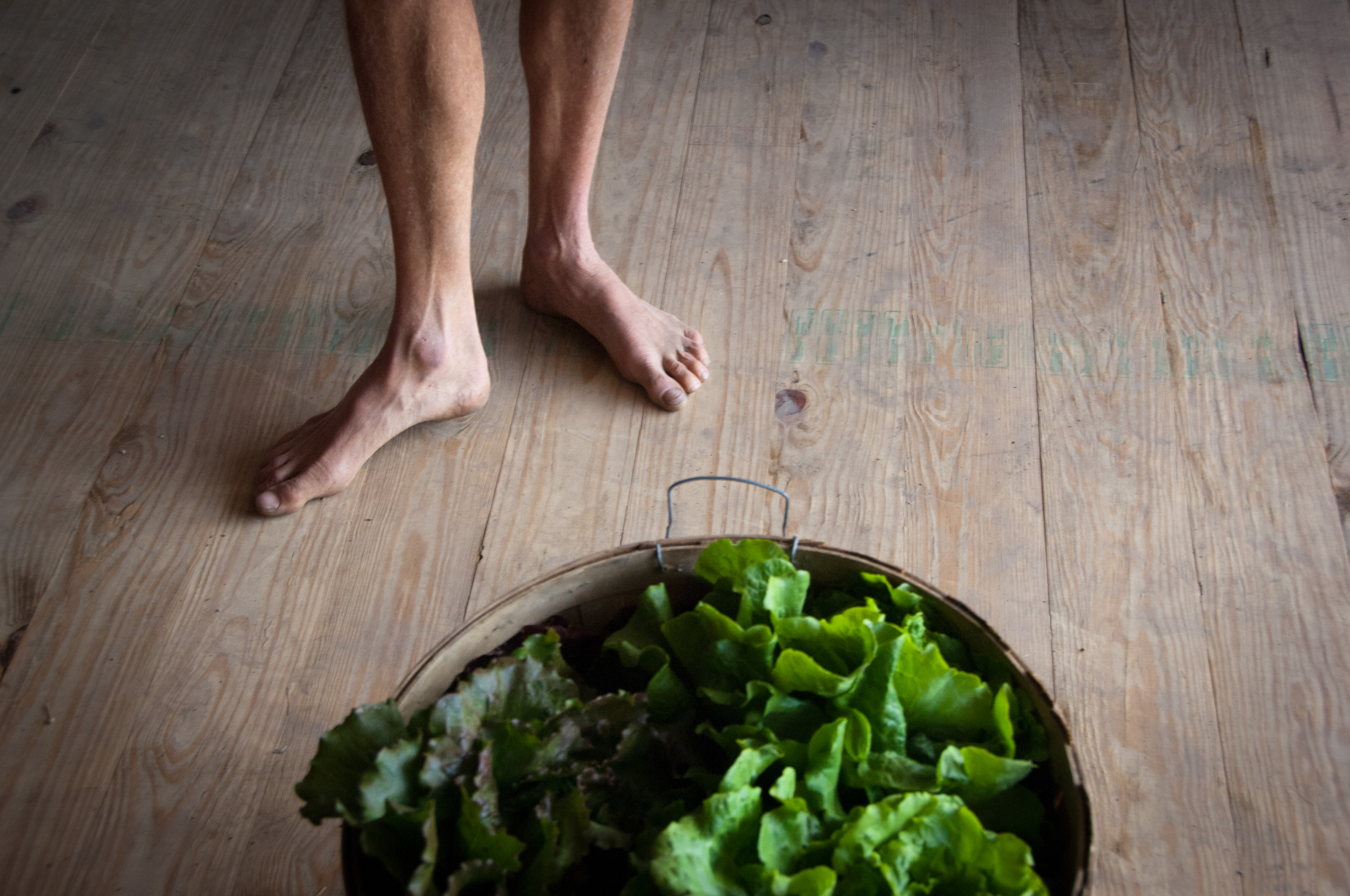 lettuce, bare feet, organic, farm