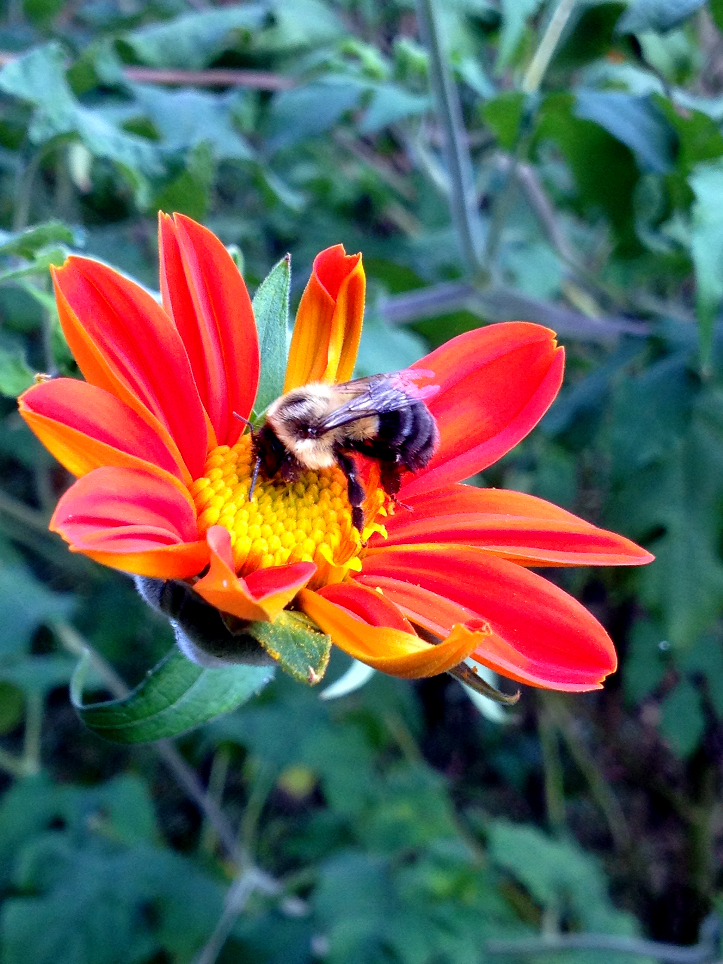 Bees love biodynamic flowers.
