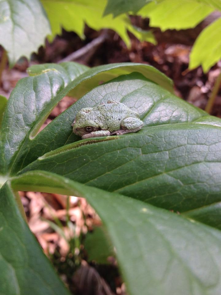 Little frog