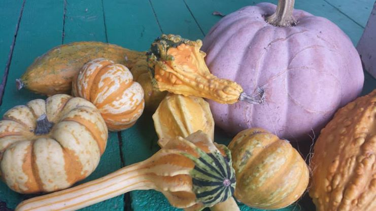 biodynamic conference gourds pumpkins